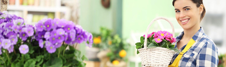 Pflanzen & Dekorationen