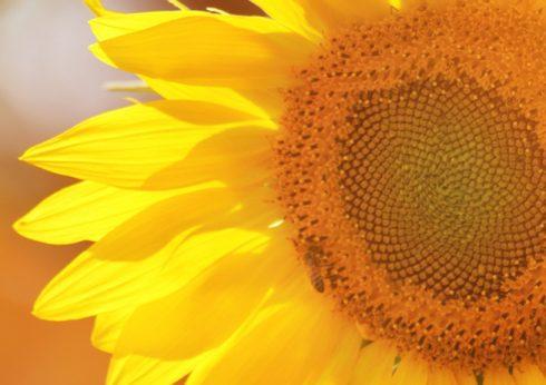 Sommerblüher für Beet und Balkon