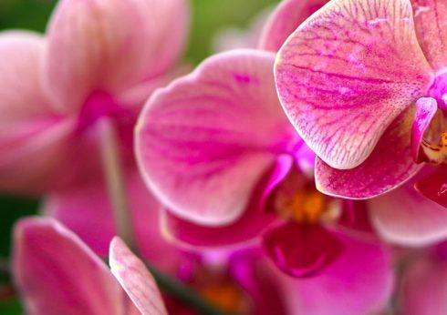 bauSpezi in Burgebrach - Orchideen Sortiment