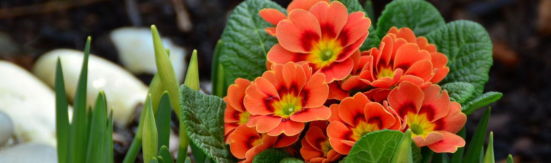 Frühlingshafte Deko aus Burgebrach