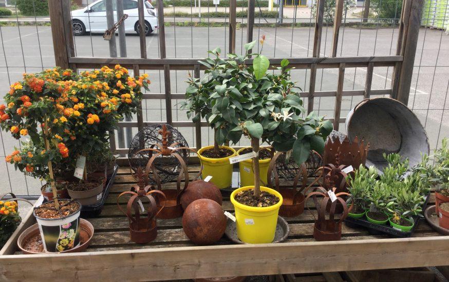 bauSpezi Burgebrach - Start in die Gartensaison