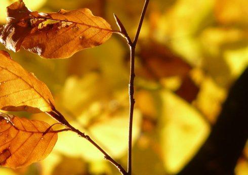 bauSpezi Burgebrach - Der Herbst steht vor der Tür